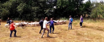 CG-Events Referenz-Bild Schafe Hueten